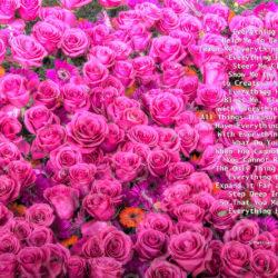 Favorite-Pink-Roses-signed-Everything-Heart-Poem9i