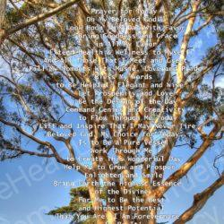 Tree-to-the-Heavens-with-Prayer-for-Today